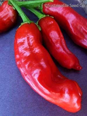 italian pepperoncini - 8