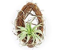 Hinterland Trading Xerographica Grapevine Wreath Basket