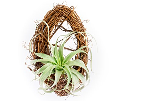 Hinterland Trading Xerographica Grapevine Wreath Basket