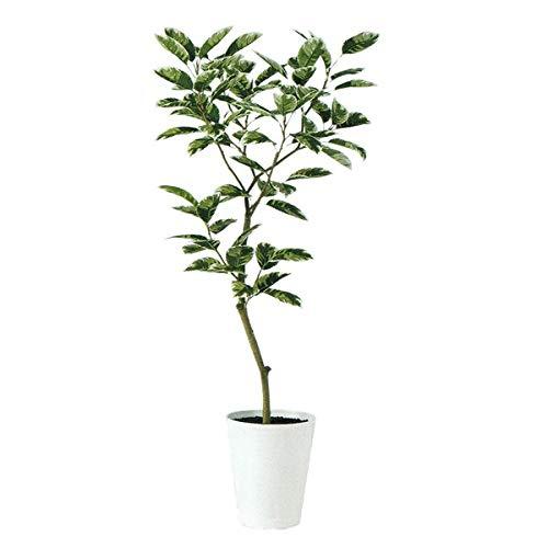 人工観葉植物 デコラトリカラーFST150 高さ150cm dt90691 (代引き不可) インテリアグリーン 造花 B07SZVMB52