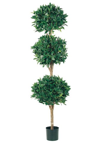 - 6' Triple Ball Sweet Bay Topiary in Pot (Pack of 2)
