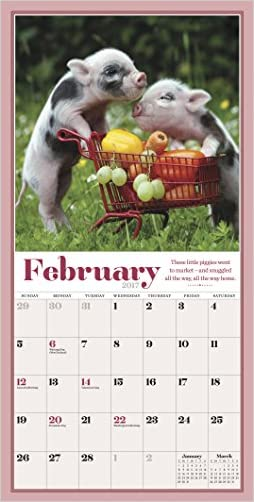 Pocket pigs mini wall calendar 2017 the famous teacup pigs of pocket pigs mini wall calendar 2017 the famous teacup pigs of pennywell farm cheap voltagebd Gallery