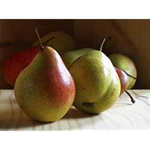 Petite Sugar Pears – 10lbs