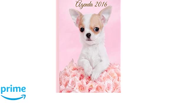 Agenda 2016: A womans Inspirational Daily Planner And Daily ...