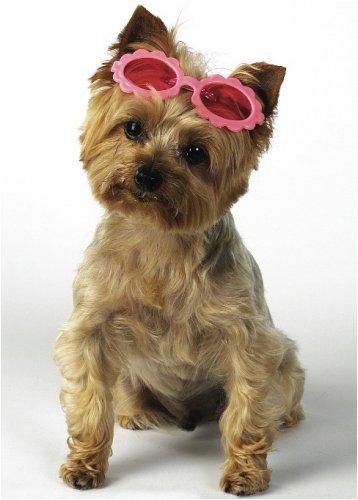 Top Performance Purple - Daisy Sunglasses Barrettes