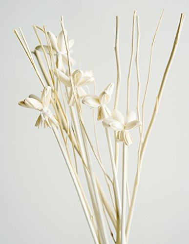 Exotic Set of Mini Night Jasmine Sola Wood Stem and Branch Reed Diffuser Arrangement for Home Fragrance Aroma Oil. by Exotic Aroma (Image #3)