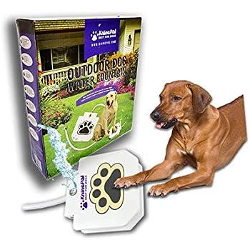 Pet Exec Software