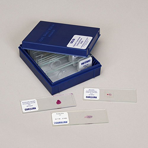 Bacteria and Fungi Microscope Slide Set