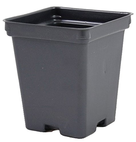 Square Greenhouse Pots 4.25 inch x 4.875 inch- Black - Plastic - Deep - Case of 375 by Growers (Square Greenhouse Pots)