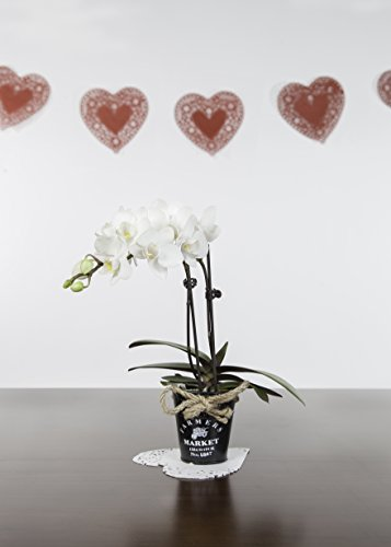 Just Add Ice 306046 Farmer's Market Mini Orchid, (Just Add Ice)
