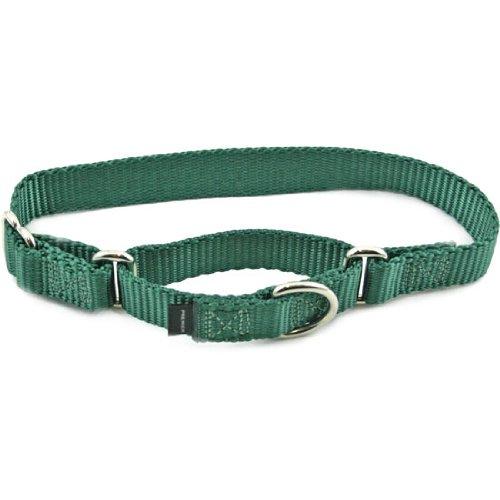 Premier Collar, Medium 1-Inch, Green, My Pet Supplies
