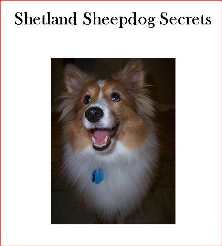 Shetland Sheepdog Secrets: How to Raise Happy and Healthy Shelties