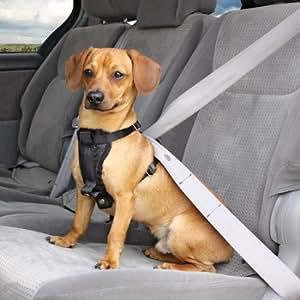 Amazon.com : Petco Premium Seat Belt Harness : Pet Vest ...