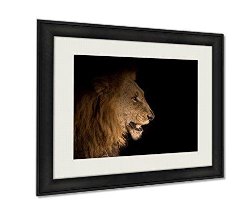 Ashley Framed Prints, Lion At Night, Wall Art Decor Giclee Photo Print In Black Wood Frame, Ready to hang, 20x25 Art, - Panthera Ebony