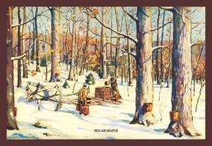 Buy buyenlarge sugar maple 20x30 paper art print