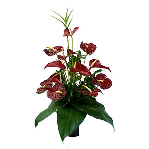 Deluxe Lava in the Forest - Hawaiian Flowers (Hawaii Fresh Flowers)