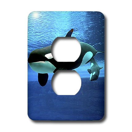 Killer Whale Light Switchplate (3dRose LLC lsp_5728_6 Killer Whales, 2 Plug Outlet Cover)
