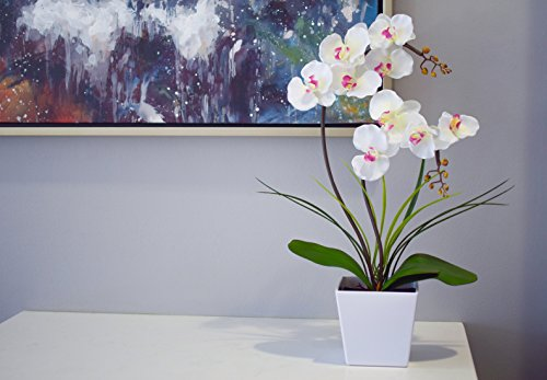Buy fake orchid