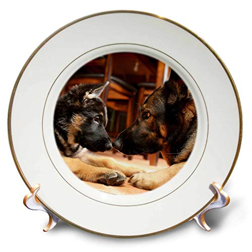 3dRose Stamp City - Animals - Photo of Two German Shepherds Nose-to-Nose Figuring Each Other Out. - 8 inch Porcelain Plate (cp_295256_1)