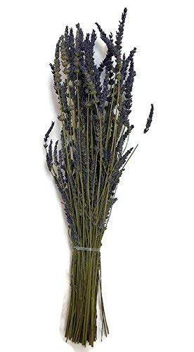zziggysgal Beautiful GROSSO Lavender Bundle freshly harvested & dried - 'California Grosso' lavender variety - about 19'' in length with approx. 100 stems by zziggysgal