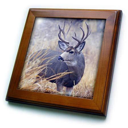 (3dRose Danita Delimont - Deer - Mule Deer Buck, Foggy Frosty Morning - 8x8 Framed Tile (ft_313994_1))