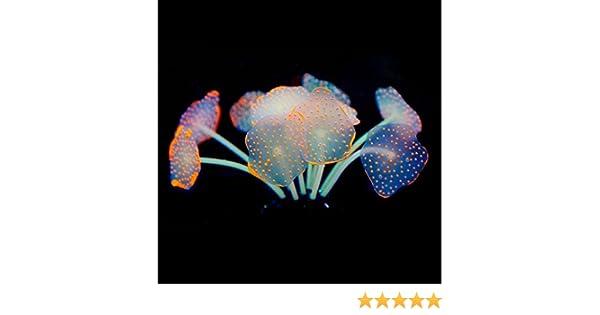 Dabixx Adorno de 11 hojas de silicona artificial para acuario: Amazon.es: Hogar