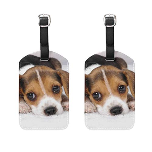 Miniature Beagle Puppies Luggage Tag Travel ID Label Leather for Baggage Suitcase - Set of 2