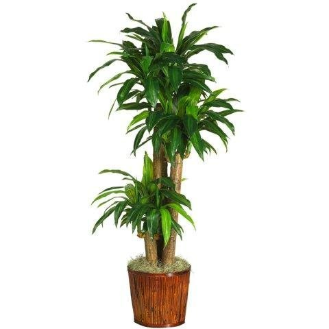 62 Inch Dracena w/Basket Silk Plant (Real Touch) by Nearly Natural