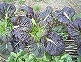 Mustard Red Giant 2000 seeds Brassica juncea Vegetable ez grow CombSH L11