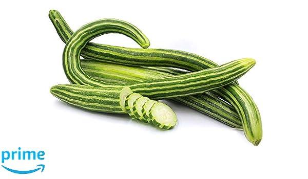 Seeds vegetable garden YARD-LONG melon fruit SNAKE SERPENT ARMENIAN CUCUMBER 15