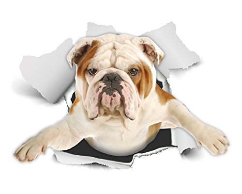 Winston & Bear 3D Dog Stickers - 2 Pack - British Bulldog Sticker for Wall, Fridge, Toilet and More - Retail Packaged English Bulldog