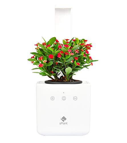 sPlant Indoor Garden Kit, Self Watering Herb Planter, Smart Planter, Hydroponics LED Growing System, Sprout LED, Desk Pot, Growing Light, Smart App Remote Control, for Kitchen/Office, Father's DayGift