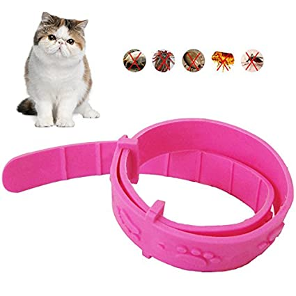 Collar para mascotas de pulgas y gatos para quitar el pulgas y el pie, collar de goma ajustable e impermeable: Amazon.es: Productos para mascotas