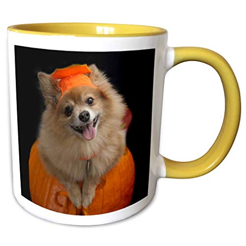 3dRose Sandy Mertens Halloween Designs - Happy Pomeranian Dog on Jack o Lantern Halloween, 3drsmm - 11oz Two-Tone Yellow Mug (mug_290230_8) ()