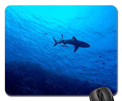 (Mouse Pads - Shark Great Barrier Reef Underwater Reef Sea Fish)