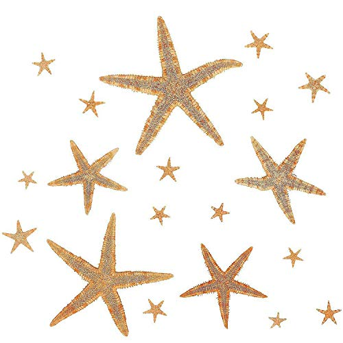 Cream Invitations (Kidsco Natural Starfish Assortment 1/2