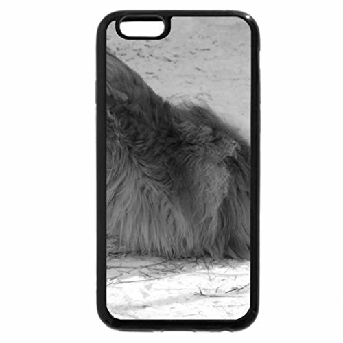 iPhone 6S Plus Case, iPhone 6 Plus Case (Black & White) - Beautiful Collie