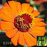 GEOPONICS 1: Promotion Time-Limited Summer Excluded Regular Mini Hundred Days Seeds of Hedysarum Bupleurum Ball On Leaves About 100 1