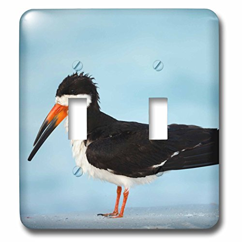 3dRose Danita Delimont - Bird - Black Skimmer resting along shore, Gulf of Mexico, Florida - Light Switch Covers - double toggle switch - Shores Outlets Gulf