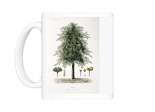 Ginkgo Biloba Maidenhair Tree - Mug of Ginkgo biloba, maidenhair tree (8603781)