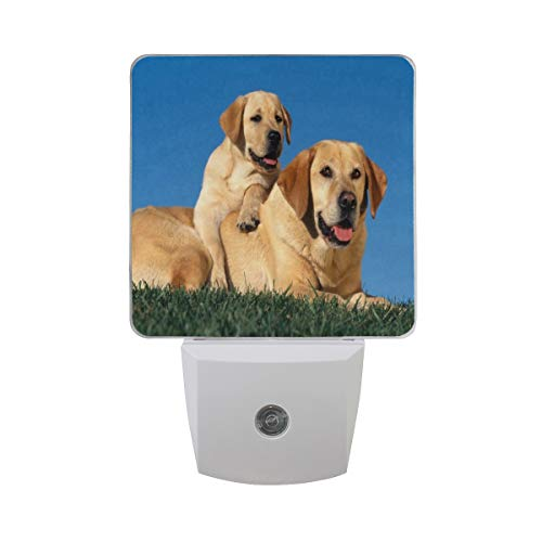 Night Lamp Labrador Puppy Golden Night Light LED Sensor Auto on/Off Led Plug in Wall Lights 2 Pack