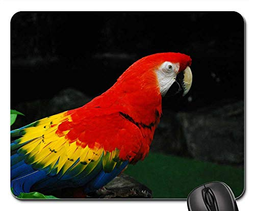 - Mouse Pad - Parrot Jurong Bird Park Singapore Bird Fly Wings