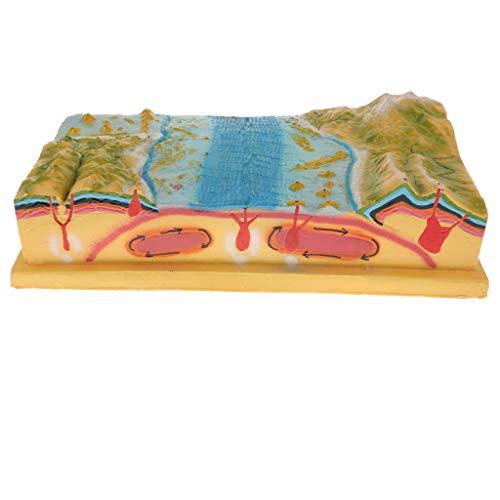 Flameer Plastic Terrain Plate Tectonics Display Model Kit School Geology Educational Toy
