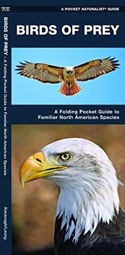 Birds of Prey: A Folding Pocket Guide to Familiar North American Species (Wildlife and Nature Identification)