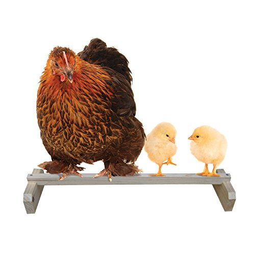 Precision Pet Portable Roosting Bar (Best Roost For Chickens)