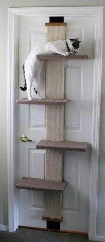 SmartCat Multi-Level Cat Climber - Cat Window Shopping Results