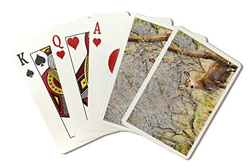 (Colorado Springs, Colorado - Mule Deer in the Woods - Photography A-92655 (Playing Card Deck - 52 Card Poker Size with Jokers))
