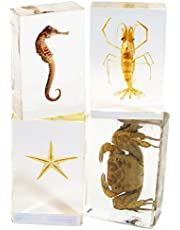 REALBUG 4 Pc Sea Life Paperweight Collection