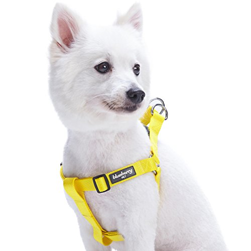 Blueberry Pet 19 Colors Step-in Classic Dog Harness, Chest Girth 16.5 - 21.5, Blazing Yellow, Small, Adjustable Harnesses for Dogs