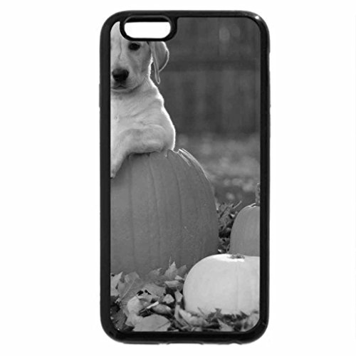 iPhone 6S Case, iPhone 6 Case (Black & White) - Dog with pumpkins